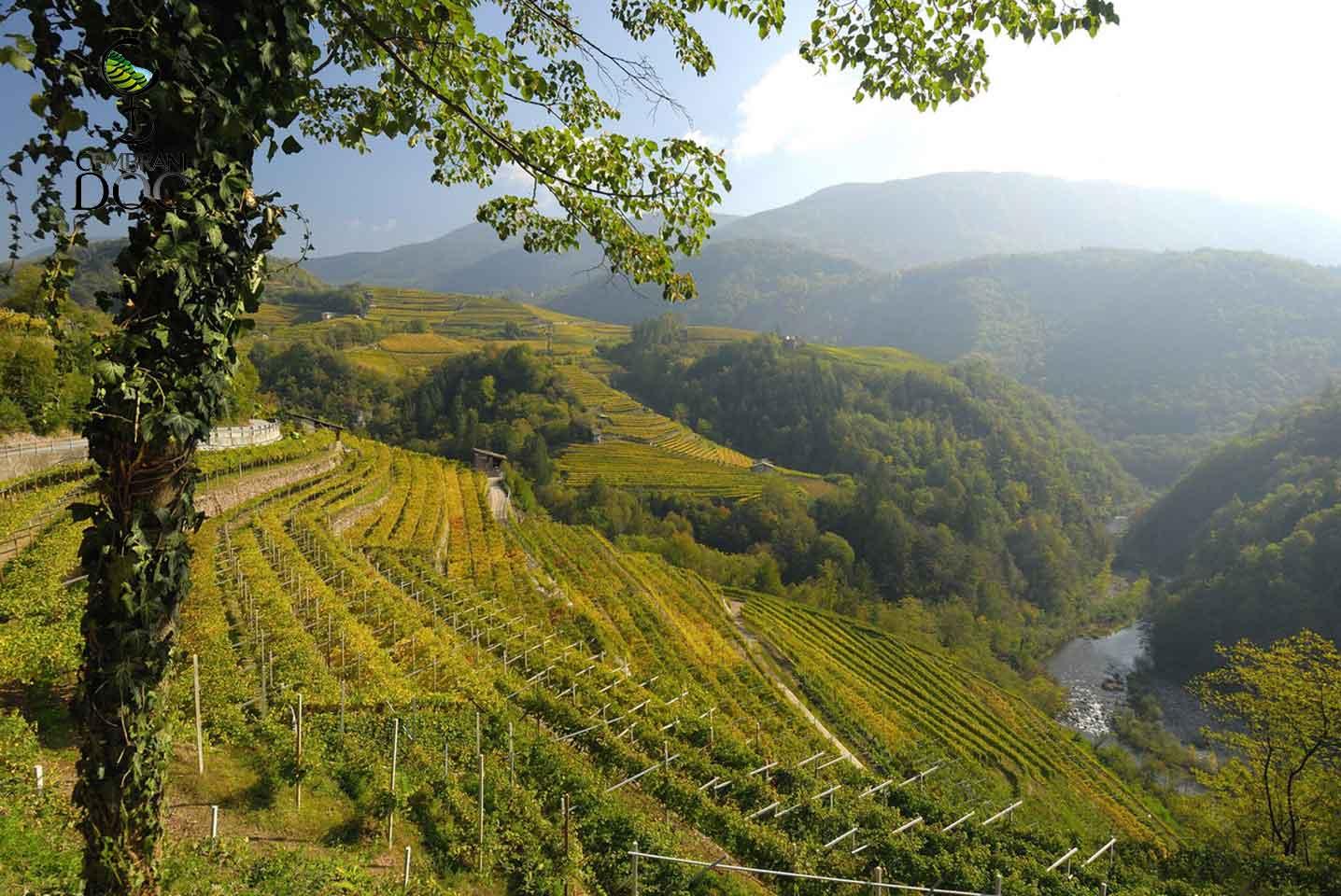 Alla scoperta dei vini della Val di Cembra con Fisar Roma